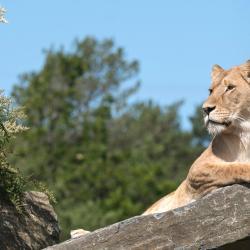 Kristiansand Zoo and Amusement Park, Kristiansand