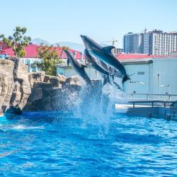 Dolphinarium, Batumis