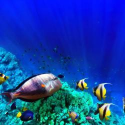 متحف أكواريوم الأحياء المائية بالغردقة, الغردقة