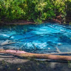 freshwater lagoons