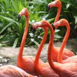 Vườn chim Jurong Bird Park