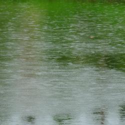 Bentota Lake, Bentota