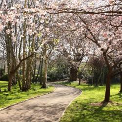 Parc Merrion