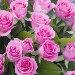 Robertson Rose Garden