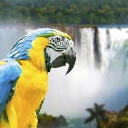 Parque Ornitológico