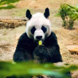 The 10 best hotels near Maokong Gondola Taipei Zoo Station