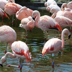 حديقة حيوان الأسكندرية