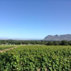 vinska klet Groot Constantia