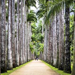 Rio de Janeiros botaniska trädgård