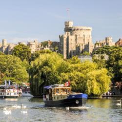 Windsori loss