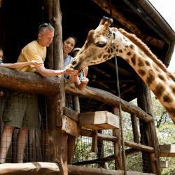 Riserva Naturale Giraffe Centre - Nairobi, Nairobi