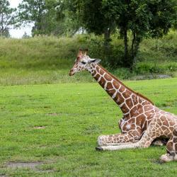 Зоопарк в Двур-Кралове, Двур-Кралове-над-Лабем