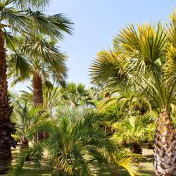 King Fahad Garden
