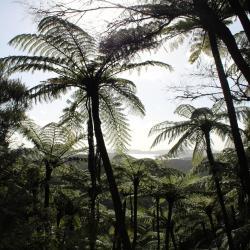 Opua Forest