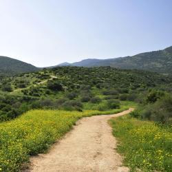 Upper Galilee 88 villas
