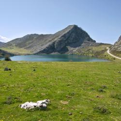 Asturias 1287 Self-catering Properties