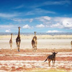 Etosha National Park 14 horských chát
