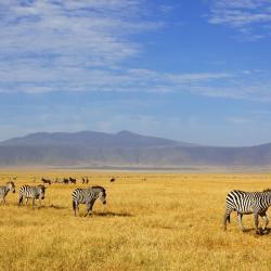 Ngorongoro 3 luxury tents