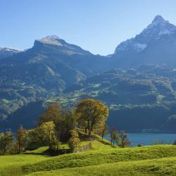 St. Gallen (distrikt)