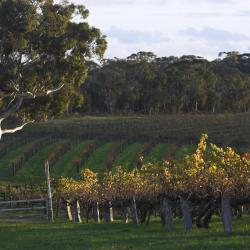 Barossa Valley 5 motels