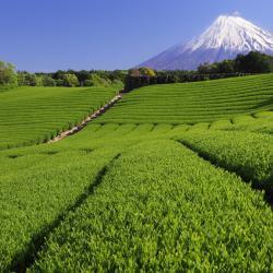 Shizuoka 9 hostels