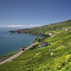 Vaud kanton