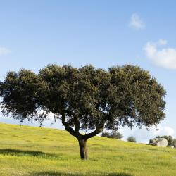 Alentejo 65 Boutique Hotels
