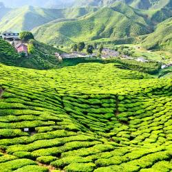 Cameron Highlands 15 luxury hotels