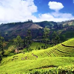 Nuwara Eliya District 215 homestays