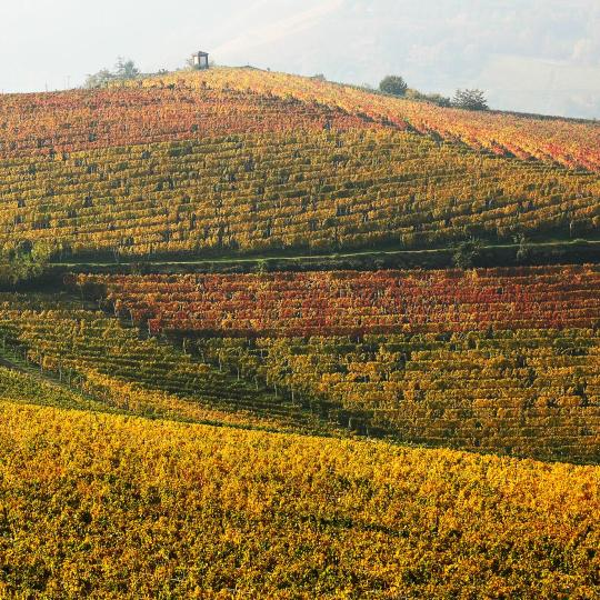 Wine itineraries in the Langhe and Montferrat areas