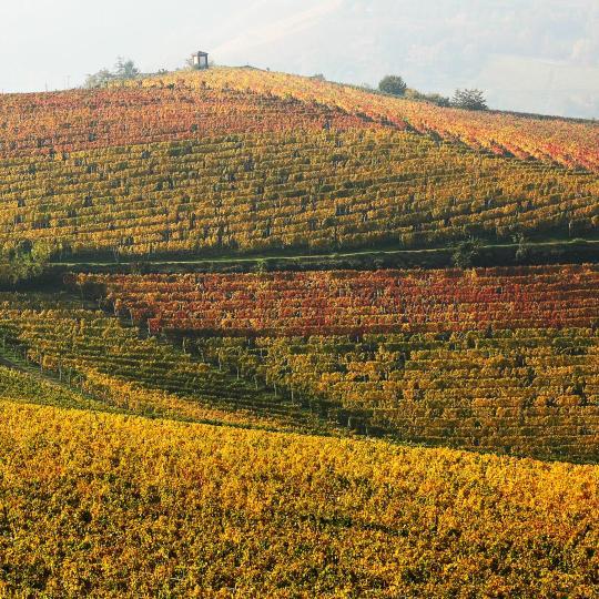 Wijnroutes in de Langhe en de regio Montferrat