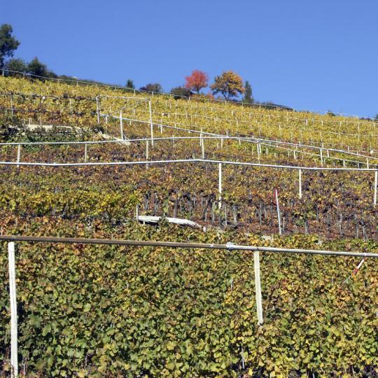 Degustacja win w regionie Visperterminen