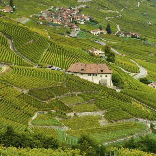 Wijnproeven in het district Mendrisiotto