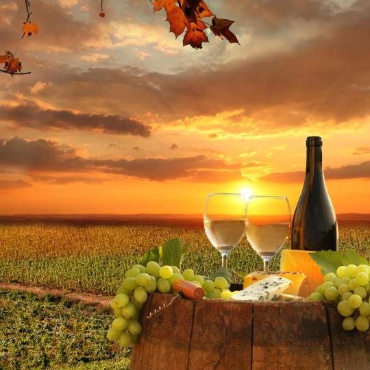 Vinné exkurze v kraji Chianti