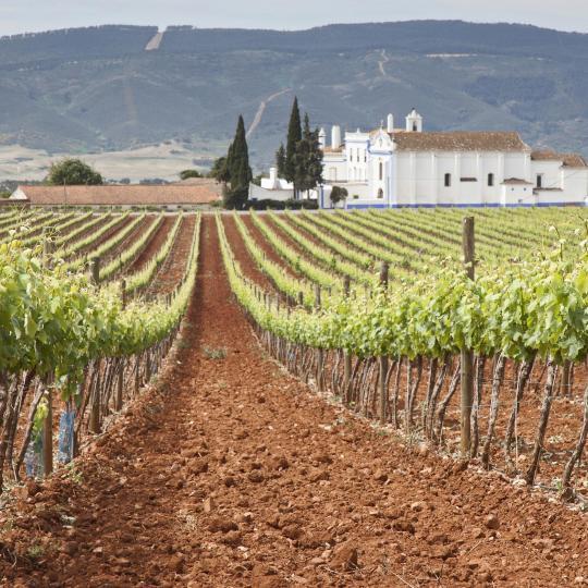 Alentejo wine route