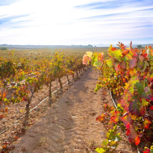 The Utiel–Requena Wine Route