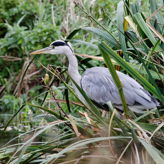 Birdwatching at Broussau Lake