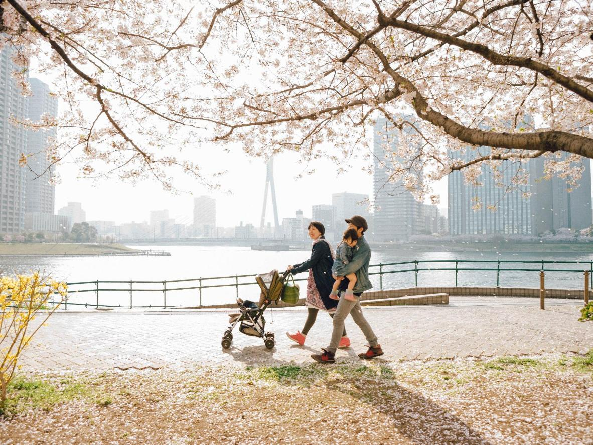 Cherry blossom (sakura) turns Tokyo pale pink come spring