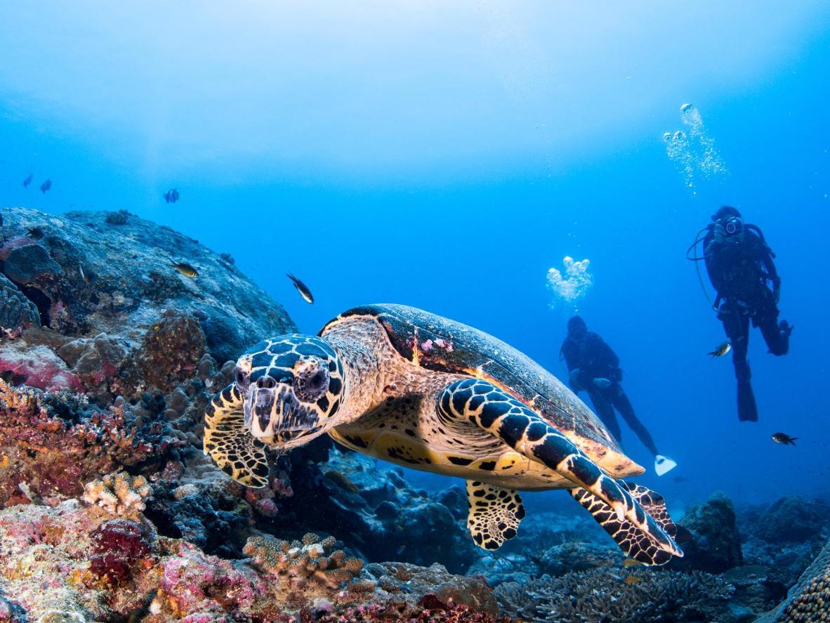 マレーシアのシパダン島周辺のサンゴ礁は、豊かな海の命に恵まれた無人島