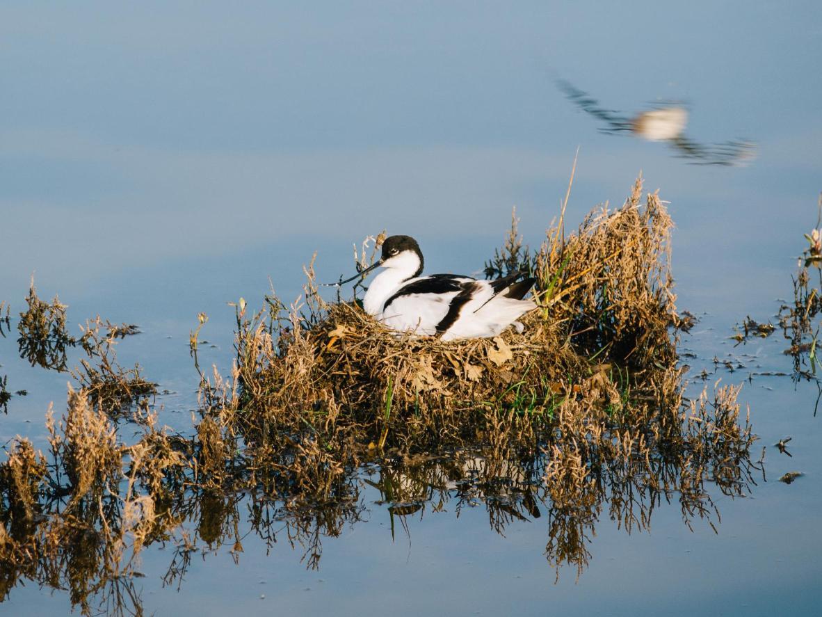 The world's best destinations for bird watching   Booking com