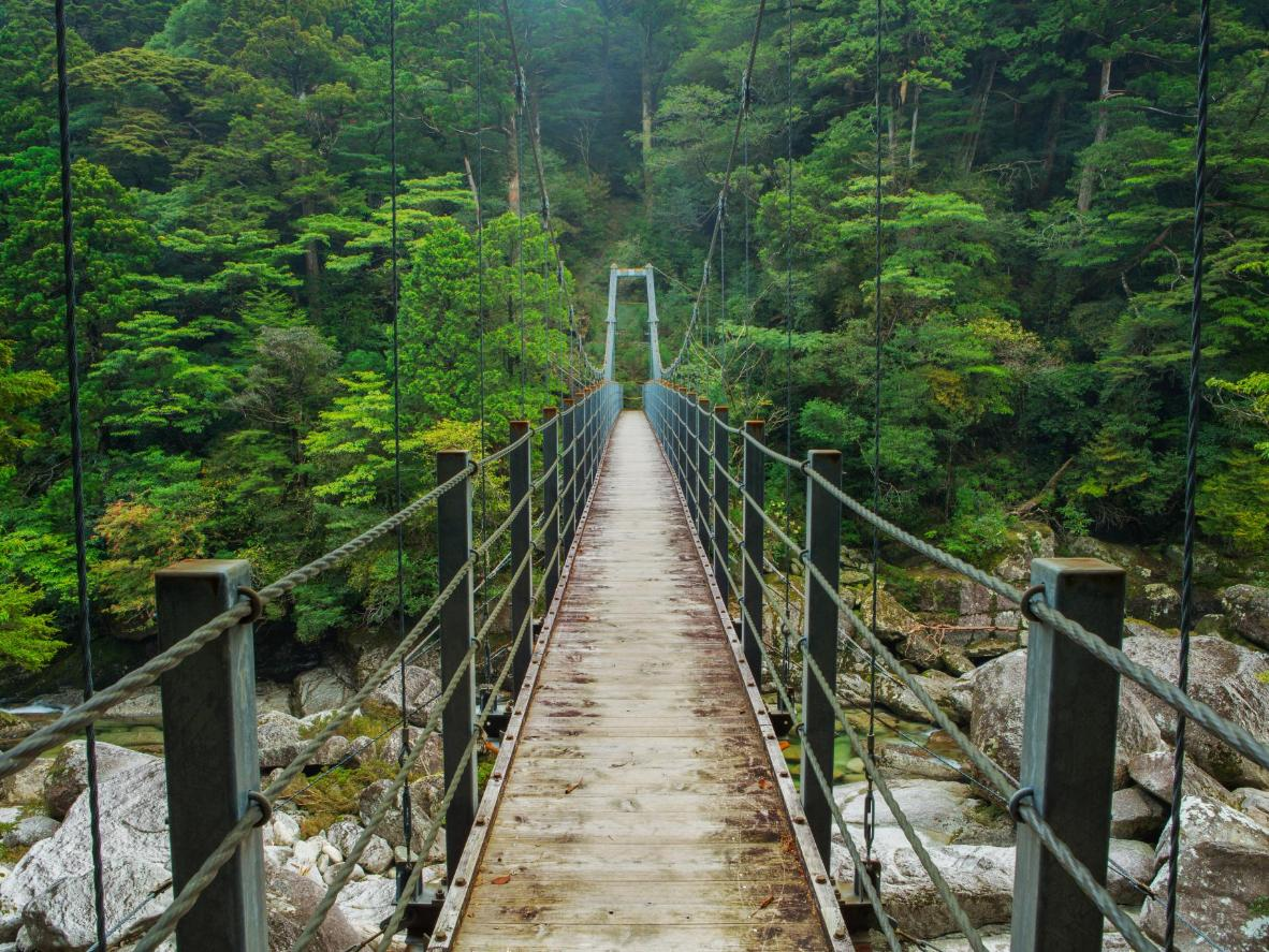 Yakushima is home to Japan's oldest tree