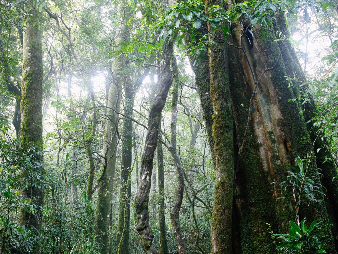The Kakamega is the last remnant of the ancient rainforest that spanned Africa