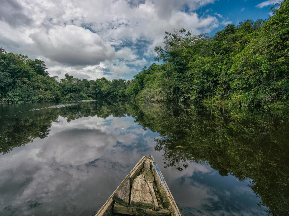 The largest rainforest in the world, the Amazon