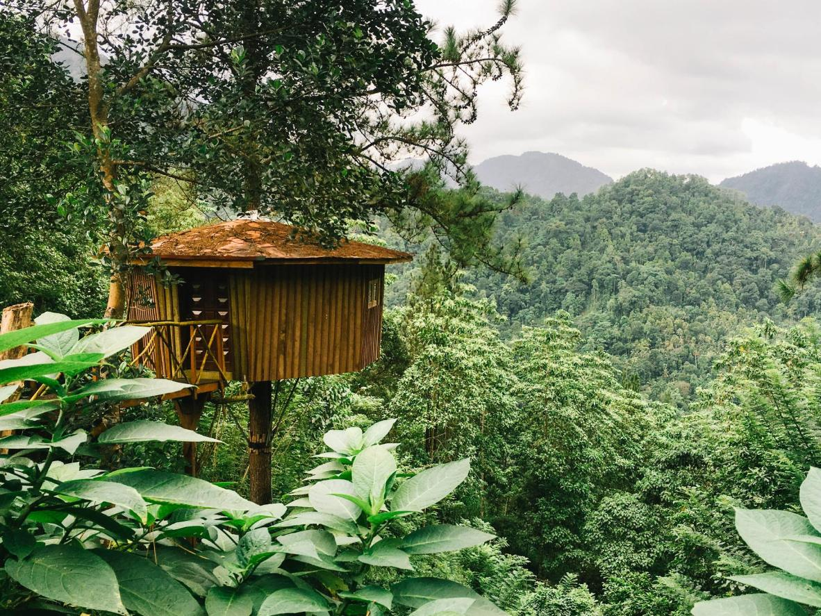Stay in a tree house in the Sri Lankan rainforest