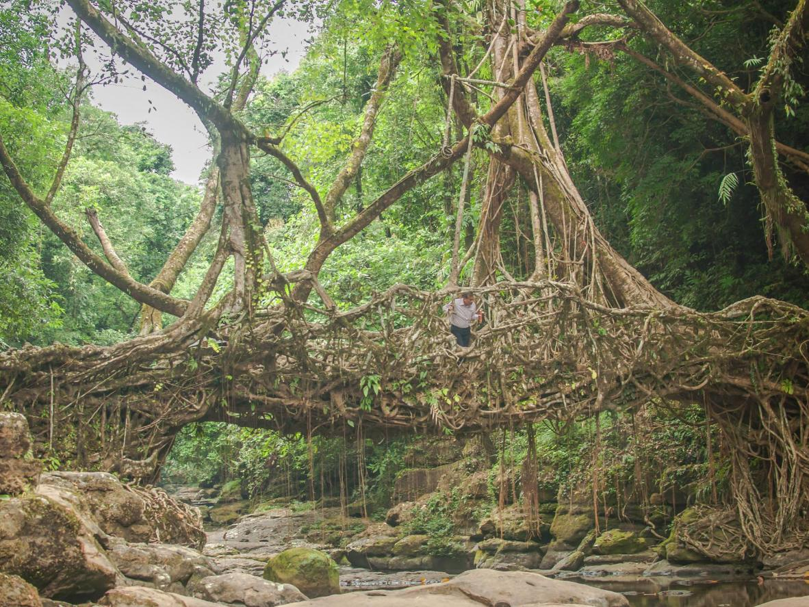 Walk across Meghalaya's living root bridges constructed by locals over hundreds of years