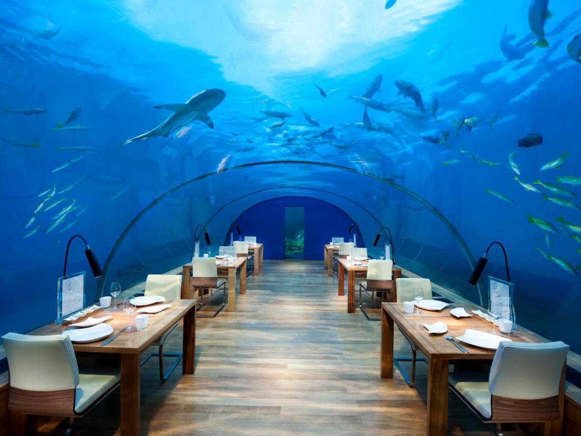 Der Tunnel des Ithaa Restaurants ist Ihr Tor zu einem farbenfrohen Meeresleben