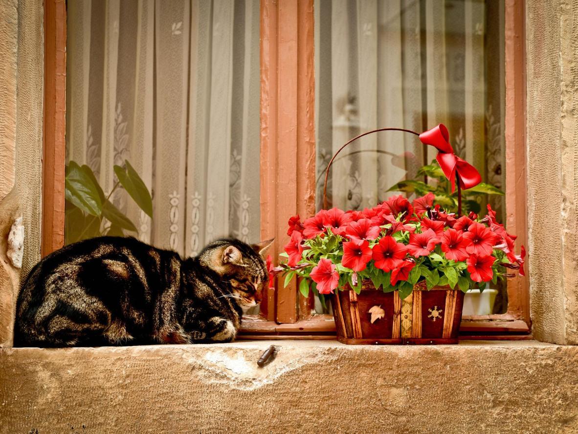 Eleganza felina nell'incantevole Matera