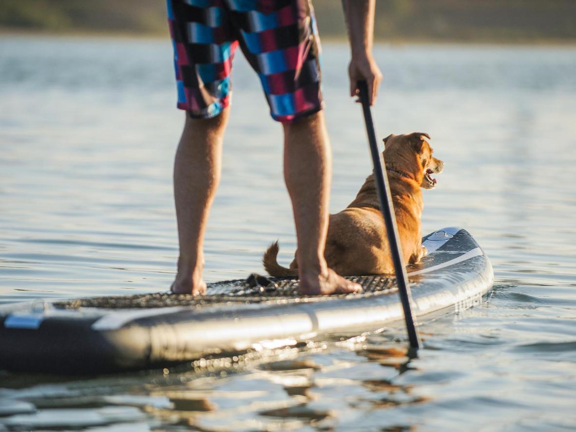 Læg kræfterne i til paddleboarding i Auckland