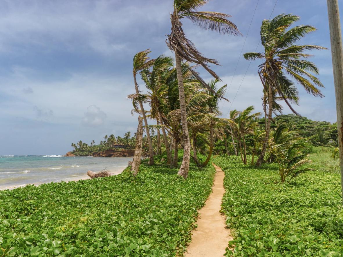 Playas tranquilas llenas de palmeras en las que huir de todo