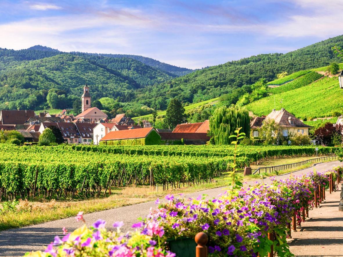 Les collines verdoyantes et les immenses vignobles de Riquewihr, en Alsace